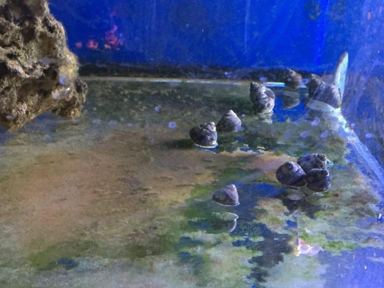 deniz akvaryumu temizlik ekibi.jpeg