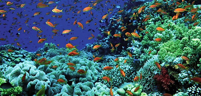 diving-sharm-el-sheikh.jpg