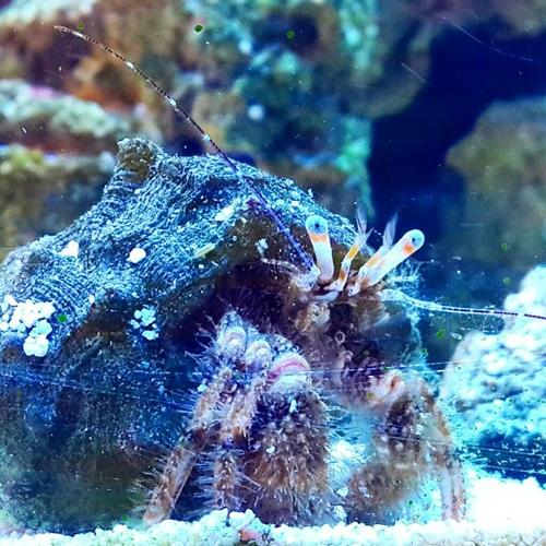 hermit crab.jpg