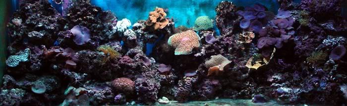 Reef Akvaryumu.jpg