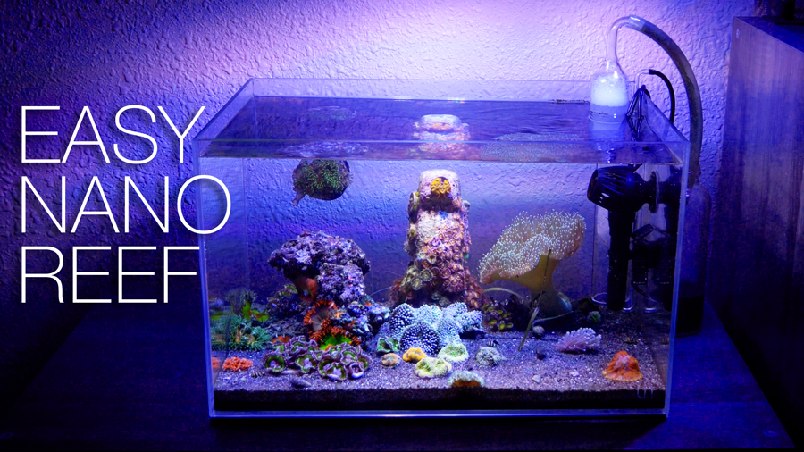 thumb-nano-reef-clean-sm.jpg