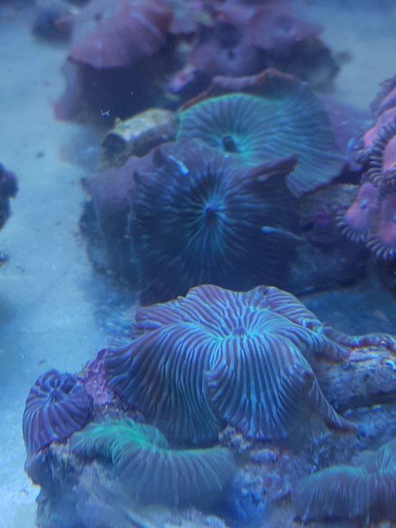 Water Mellon Green Mushroom (Many Stripe)1.jpeg