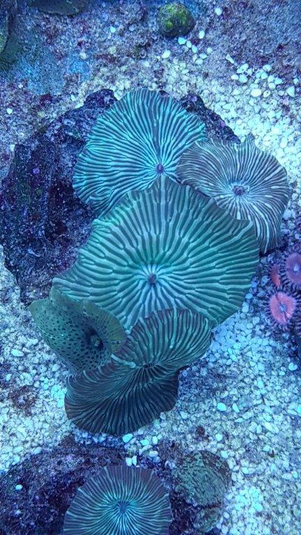 Water Mellon Green Mushroom (Many Stripe)2.jpeg